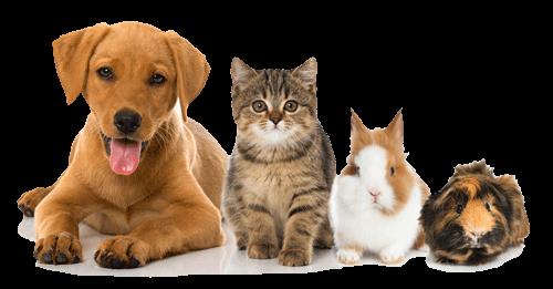 Mobile Tierheilpraxis für Homöopathie, Phytotherapie, Mykotherapie und Ernährungsberatung für Kaninchen, Hunde und Katzen in Tönisvorst und Umgebung.