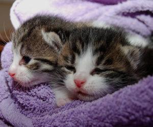Katzenbetreuung und Kleintierbetreuung