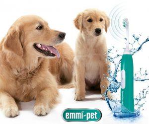 emmi-pet Zahnreinigung